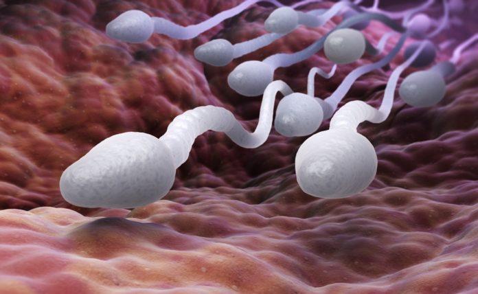 Samen Zwanger - Kwaliteit sperma verbeteren
