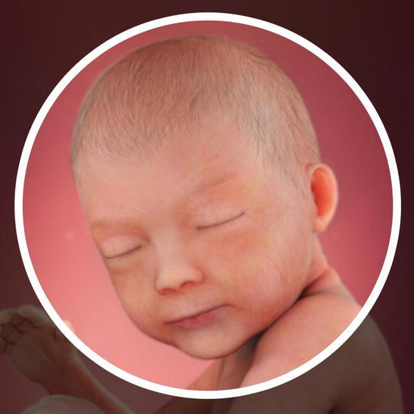 Samen Zwanger _ 30 weken zwanger - trimester 3 week 30 foto (1)