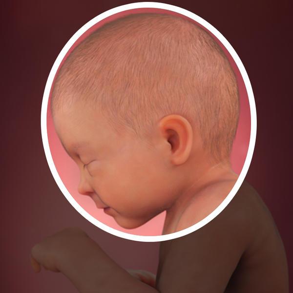 Samen Zwanger _ 33 weken zwanger - trimester 3 week 33 foto (1)