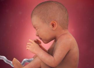 Samen Zwanger _ 35 weken zwanger - trimester 3 week 35 foto (3)