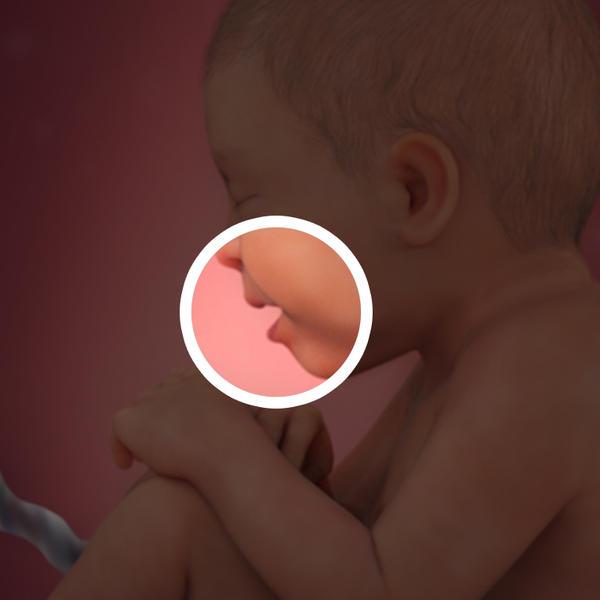 Samen Zwanger _ 36 weken zwanger - trimester 3 week 36 foto (1)