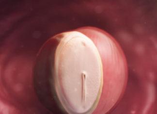 Samen Zwanger_4 weken zwanger 1