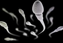 Samen Zwanger - Onrijp sperma geen gezondheidsrisico voor kinderen