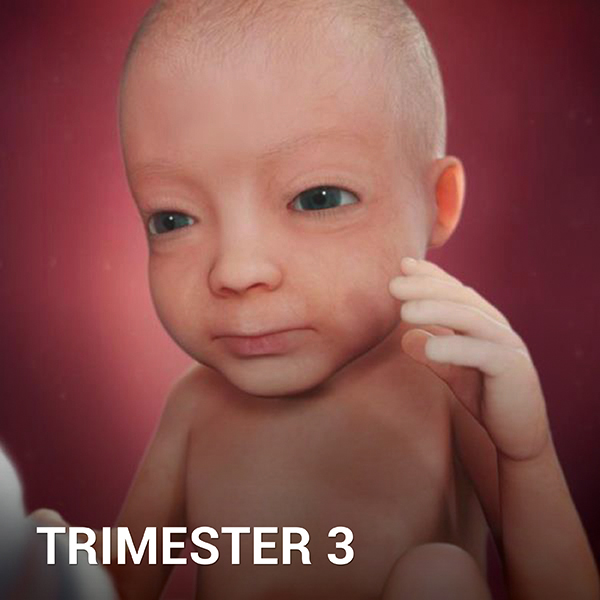 Samen Zwanger - Trimester 3