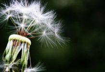 Samen Zwanger - Waarom veel mensen allergie krijgen