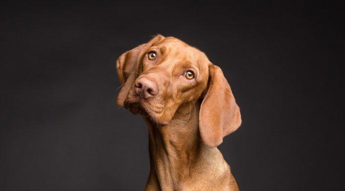 Samen Zwanger - De reden waarom honden hun poot op jouw zwangere buik leggen
